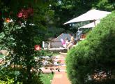 Swimming-Pool-in-the-greenery.jpg